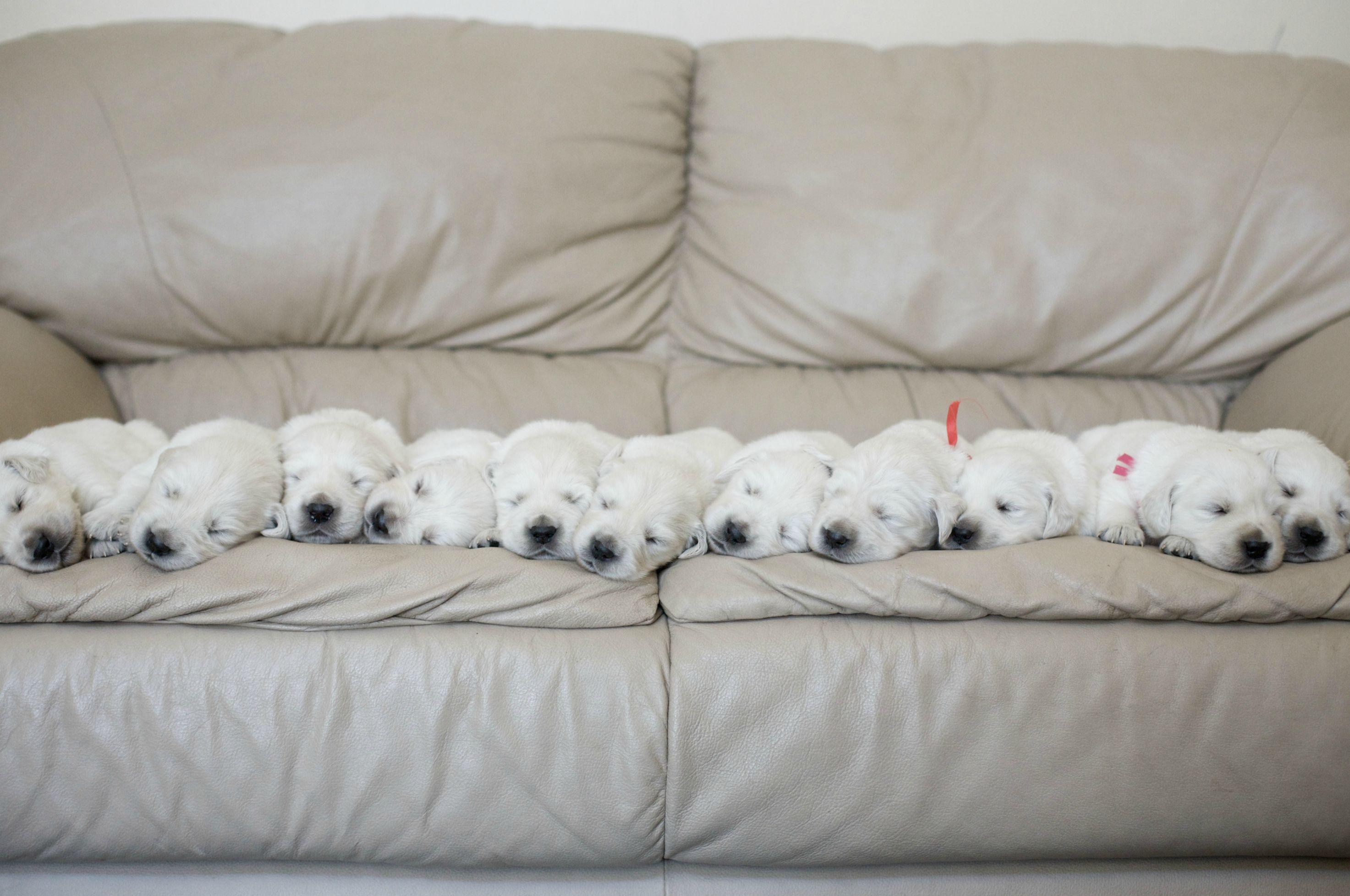 sleeping dogs how to kill yaogai